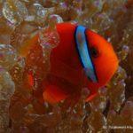 Filipiny 14szkoła nurkowania kraków