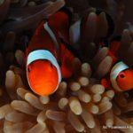 Filipiny 26szkoła nurkowania kraków