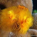 Filipiny 32szkoła nurkowania kraków