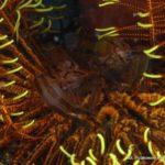 Filipiny 37szkoła nurkowania kraków