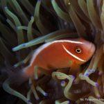 Filipiny 38szkoła nurkowania kraków