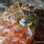 Filipiny 40szkoła nurkowania kraków
