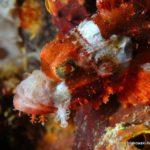 Filipiny 54szkoła nurkowania kraków