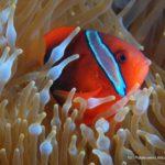 Filipiny 61szkoła nurkowania kraków