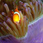 Filipiny 68szkoła nurkowania kraków