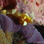 Filipiny 74szkoła nurkowania kraków