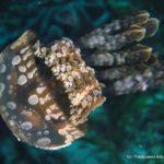 Filipiny 75szkoła nurkowania kraków