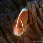 Filipiny 76szkoła nurkowania kraków