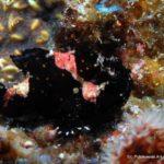 Filipiny 87szkoła nurkowania kraków