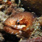 Filipiny 110szkoła nurkowania kraków