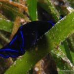 Filipiny 118szkoła nurkowania kraków
