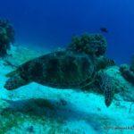 Filipiny 119szkoła nurkowania kraków