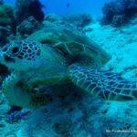 Filipiny 120szkoła nurkowania kraków