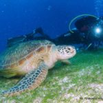 Filipiny 121szkoła nurkowania kraków