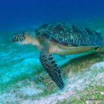 Filipiny 122szkoła nurkowania kraków