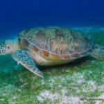 Filipiny 123szkoła nurkowania kraków