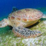 Filipiny 124szkoła nurkowania kraków
