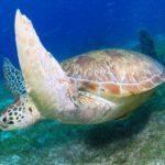 Filipiny 125szkoła nurkowania kraków
