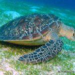 Filipiny 126szkoła nurkowania kraków