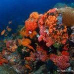 Filipiny 127szkoła nurkowania kraków