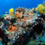 Filipiny 128szkoła nurkowania kraków