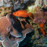 Filipiny 130szkoła nurkowania kraków