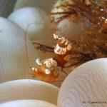 Filipiny 133szkoła nurkowania kraków