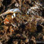 Filipiny 148szkoła nurkowania kraków