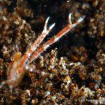 Filipiny 158szkoła nurkowania kraków