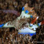 Filipiny 173szkoła nurkowania kraków
