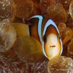 Filipiny 174szkoła nurkowania kraków