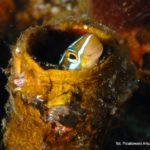 Filipiny 176szkoła nurkowania kraków