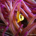 Filipiny 177szkoła nurkowania kraków