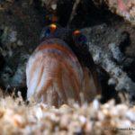 Filipiny 182szkoła nurkowania kraków