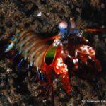 Filipiny 184szkoła nurkowania kraków