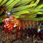 Filipiny 187szkoła nurkowania kraków