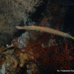Filipiny 189szkoła nurkowania kraków