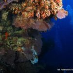 Filipiny 190szkoła nurkowania kraków