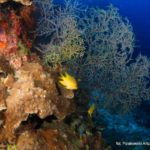 Filipiny 193szkoła nurkowania kraków