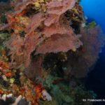 Filipiny 194szkoła nurkowania kraków