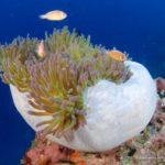 Filipiny 196szkoła nurkowania kraków