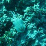 Hurghada, Egipt 13szkoła nurkowania kraków