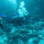 Hurghada, Egipt 35szkoła nurkowania kraków