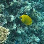 Hurghada, Egipt 42szkoła nurkowania kraków