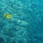 Hurghada, Egipt 43szkoła nurkowania kraków