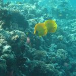 Hurghada, Egipt 44szkoła nurkowania kraków