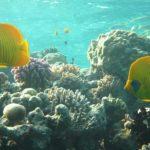 Hurghada, Egipt 45szkoła nurkowania kraków