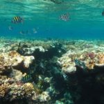 Hurghada, Egipt 55szkoła nurkowania kraków