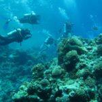 Hurghada, Egipt 56szkoła nurkowania kraków