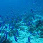 Hurghada, Egipt 60szkoła nurkowania kraków
